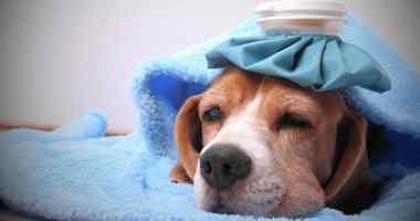 تحذير من انتشار أنفلونزا الكلاب خلال الفترة القادمة