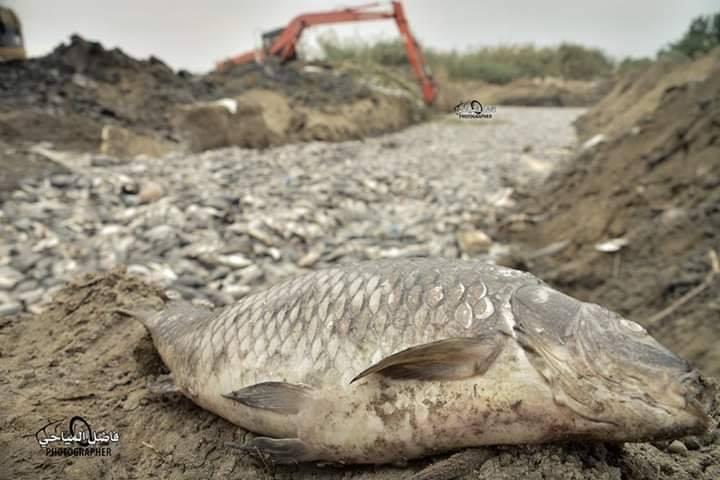 كارثة بيئية تحل بنهر الفرات ولا أحد يعلم الاسباب..