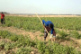 العراق يعرض 50 الف دونم زراعي للاستثمار على هولندا