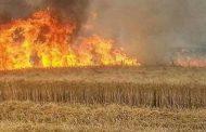 """""""داعش"""" يحرق مزرعة للحنطة"""